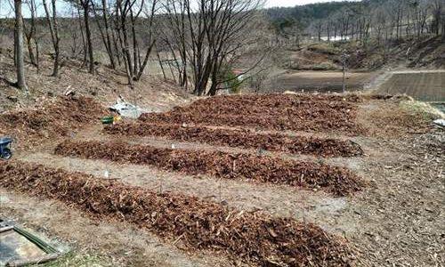 ブルーベリーの定植 幼苗を50本植えました